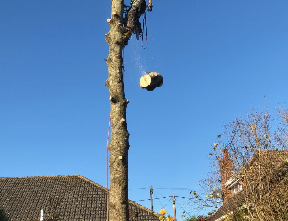 Hire A Tree Surgeon For Your Pruning Needs