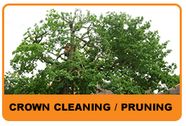 crown cleaning and pruning