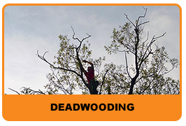 deadwooding