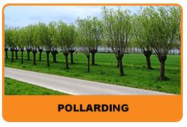 Pollarding