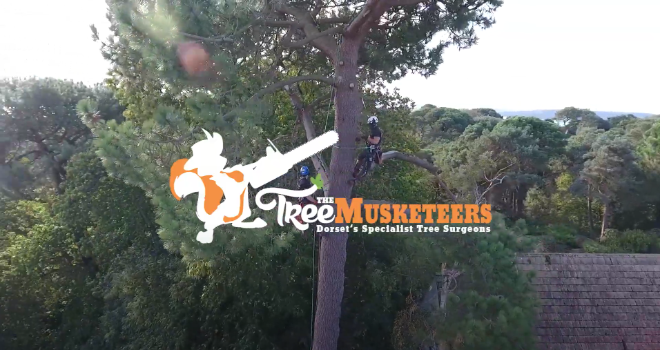 Tree Muskeeters Tree Surgeon